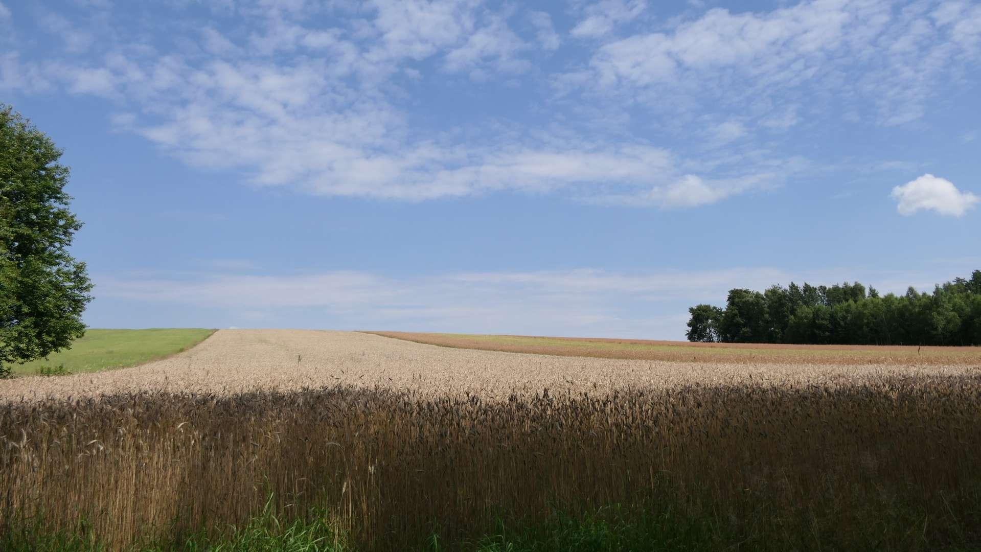 Roztoczańskie pola