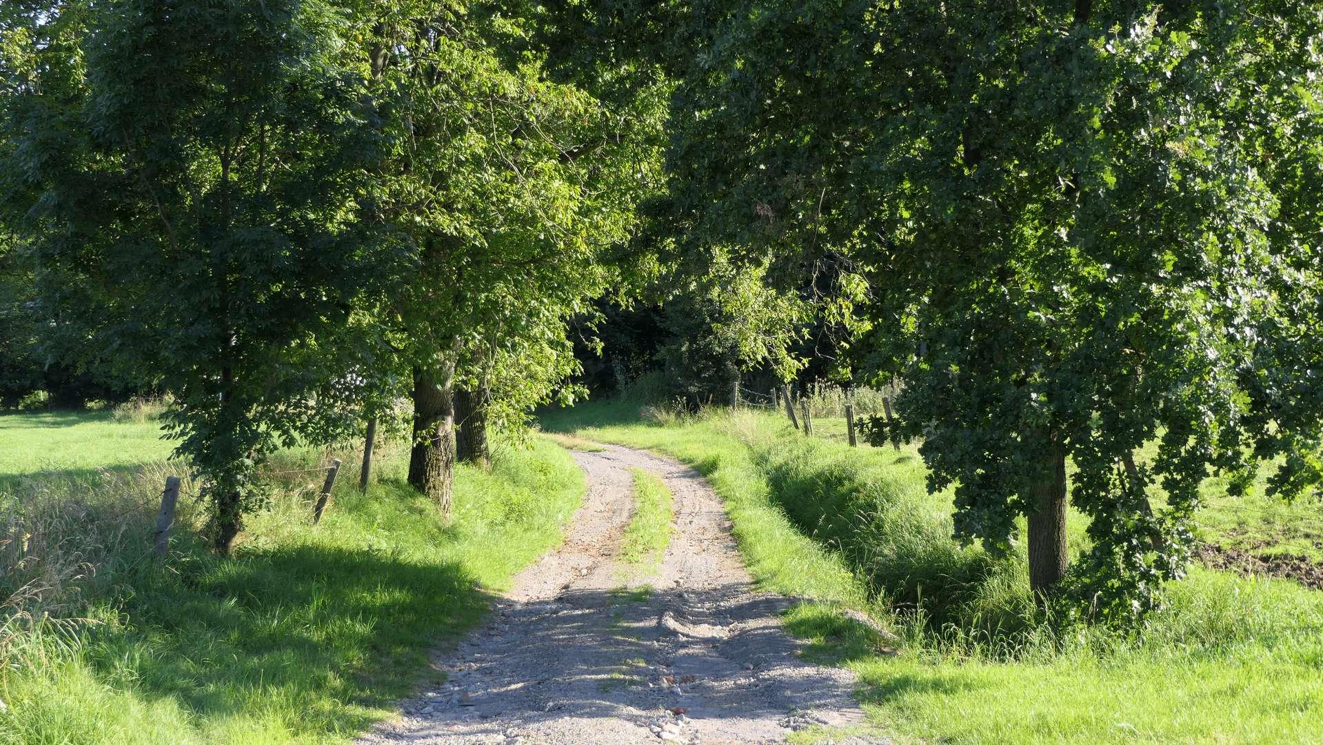 Polna droga w okolicy Zamarskich