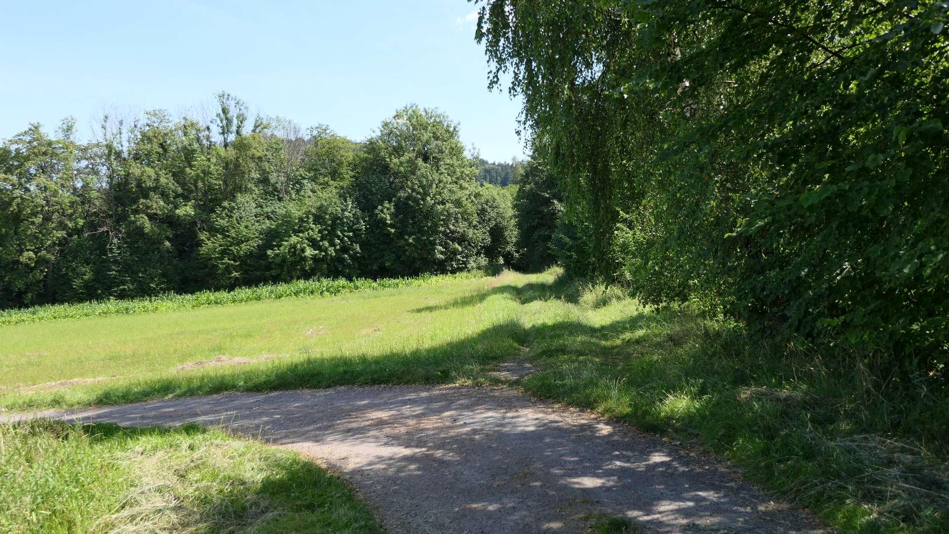 Droga polna w Kojkowicach
