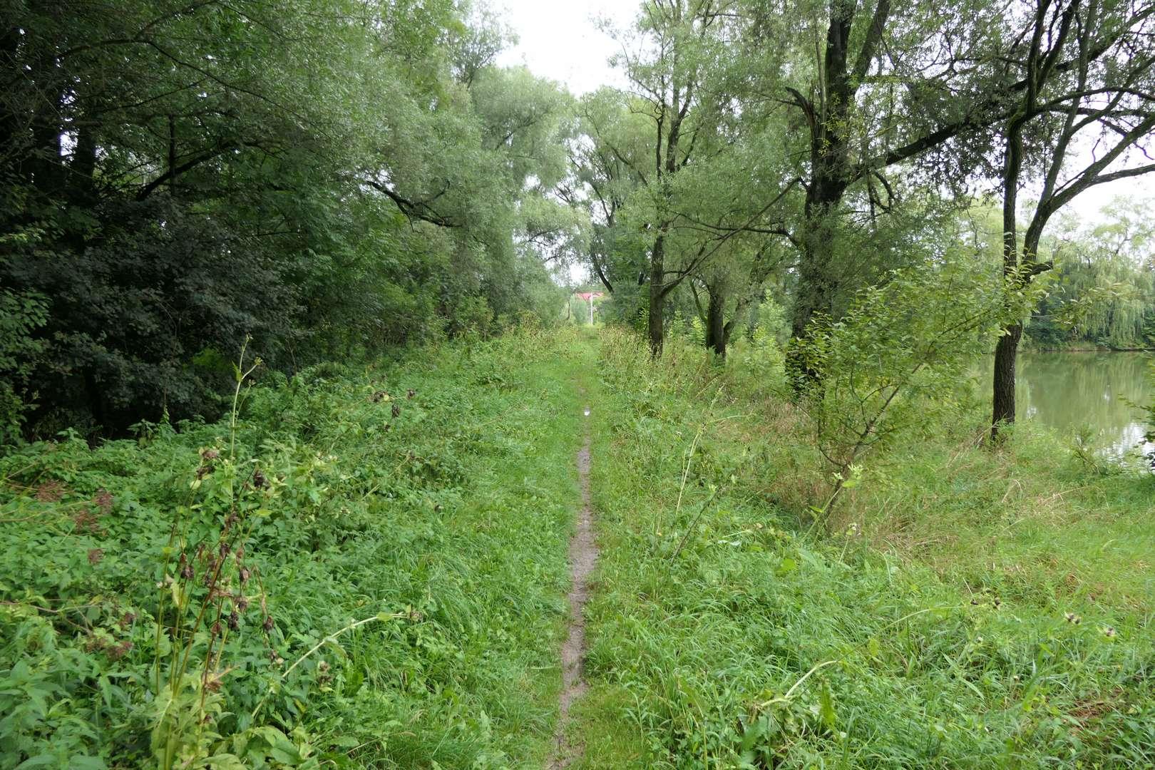 Wzdłuż gułdowskich stawów prowadzi ścieżka wychodząca wprost na ul. Mleczną.