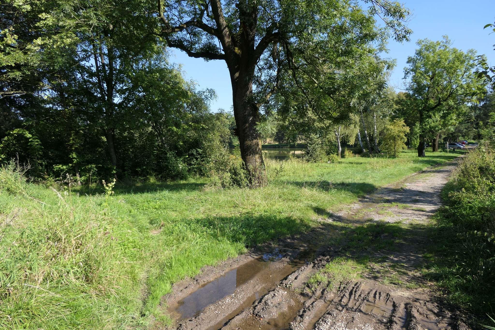 W miejscu, w którym ul. Ustrońska skręca w prawo, należy skręcić w lewo ścieżką obok widocznego na zdjęciu drzewa.