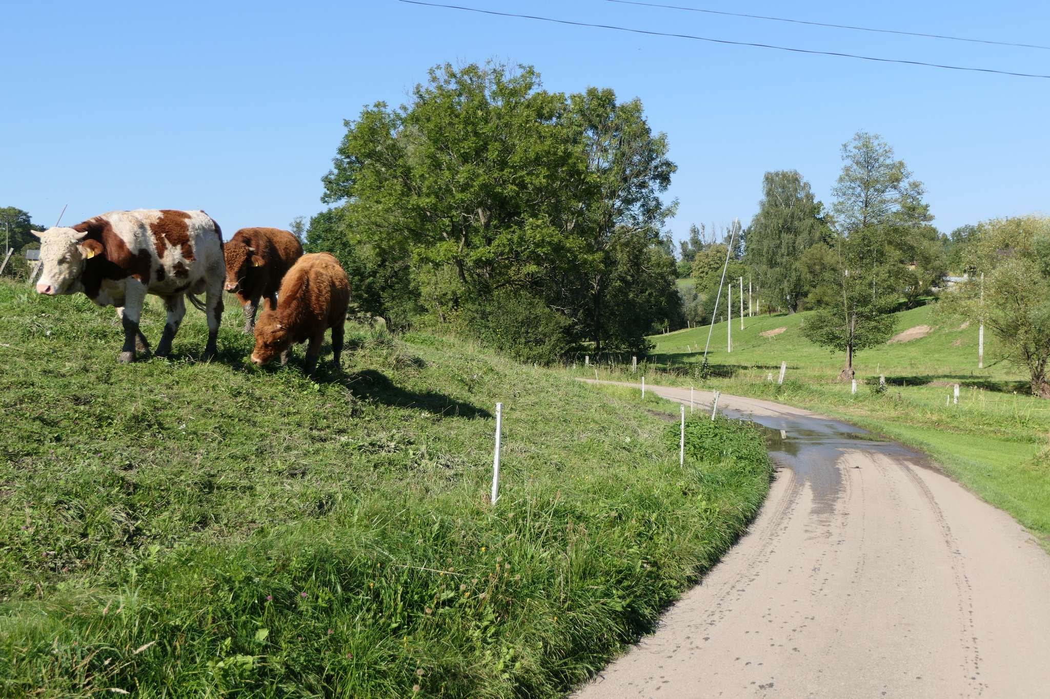 Okolica wciąż zachowała swój pierwotny, rolniczy charakter.