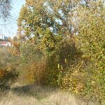 Widok z torowiska w stronę Banotówki.