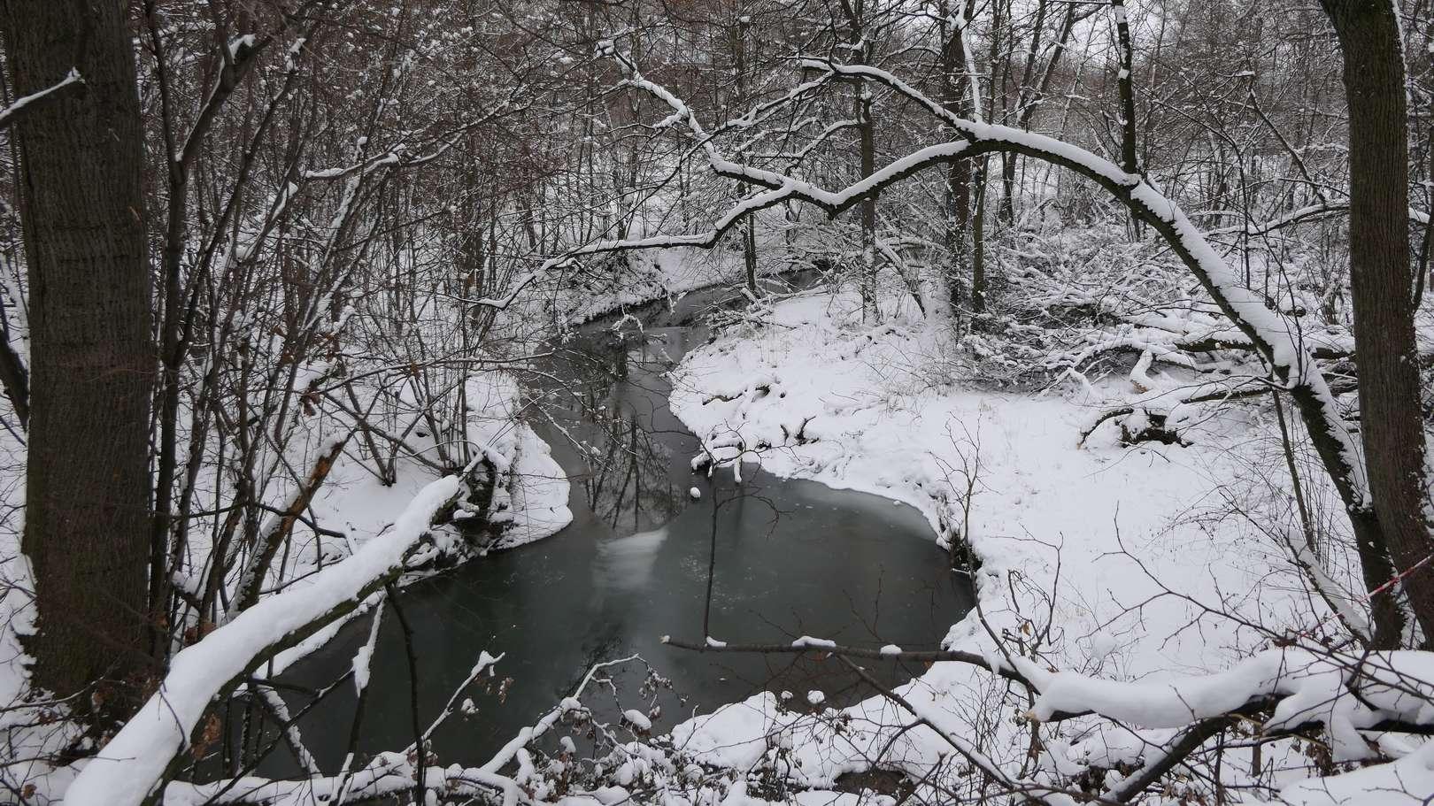 Zakola Bobrówki w okolicach lasu Strzelbin.