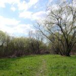Niewielka łąka, za którą rozpoczynają się trudne do przebrnięcia chaszcze. Nie zrażając się przewidywanymi trudnościami wbijamy się w gąszcz.