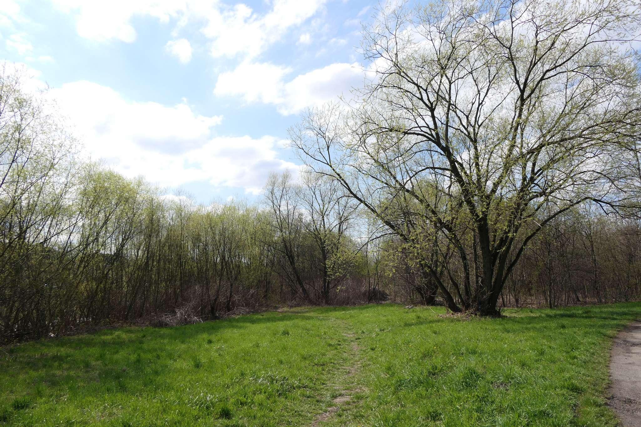 Niewielka łąka, za którą rozpoczynają się trudne do przebrnięcia chaszcze. Nie zrażając się przewidywanymi trudnościami wbijamy się w gąszcz. W tym roku to może już ostatnia okazja zanim dzika roślinność całkowicie przesłoni przejście.