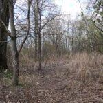Pas niezagospodarowanego terenu wzdłuż Olzy ma od kilku do kilkudziesięciu metrów szerokości i jest wystarczająco wysoko w stosunku do poziomu rzeki, aby nie groziły mu podtopienia.