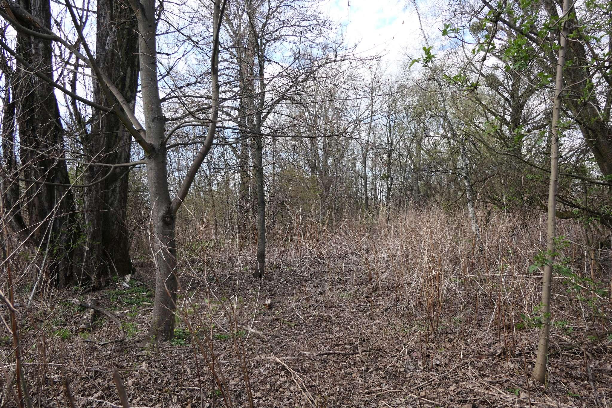 Pas niezagospodarowanego terenu wzdłuż Olzy ma od kilkunastu do kilkudziesięciu metrów szerokości i jest wystarczająco wysoko w stosunku do poziomu rzeki, aby nie groziły mu podtopienia.
