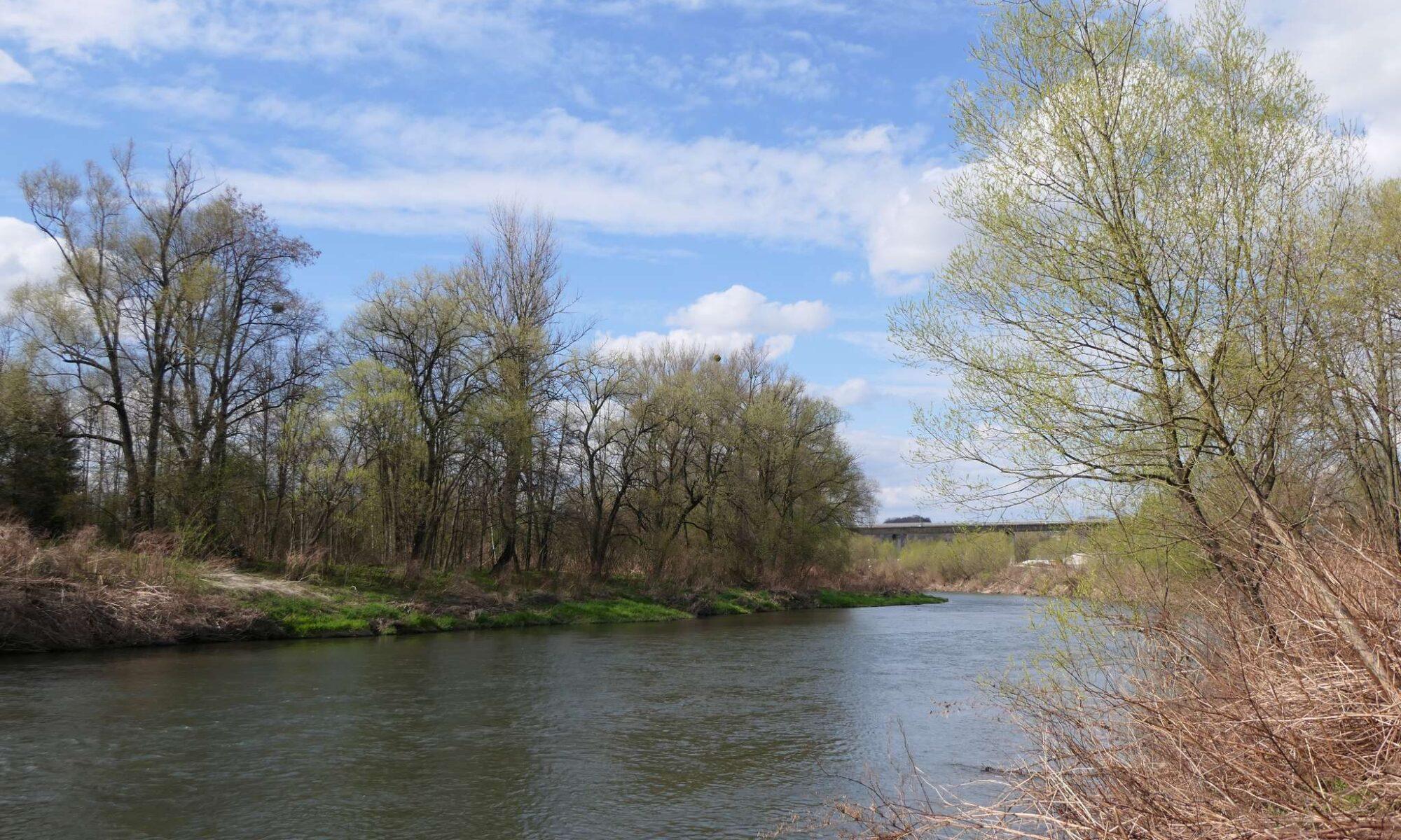 Im dalej od centrum, tym więcej zieleni również na czeskim brzegu Olzy.